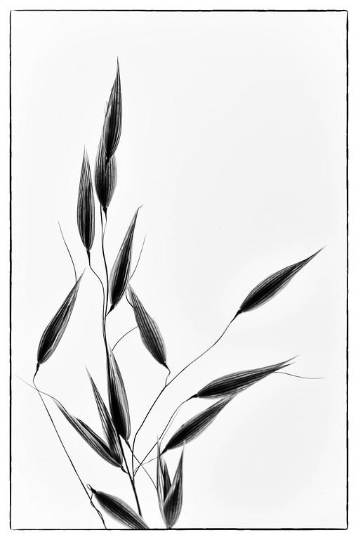 1Print-MC-Seeds-Hans Holtkamp