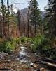 SC-The Forest Lives On-Doris Santha