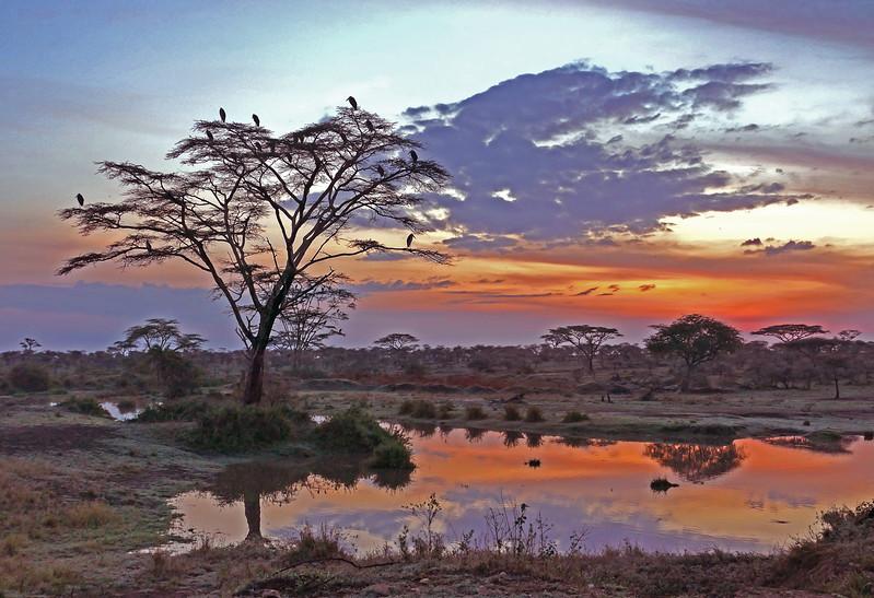 1Print-SC-Serengeti Safari Sunrise-Gayvin Franson