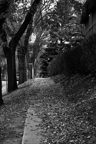 BW-Leaf Covered Walk-Adam Clancy