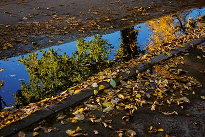 TR-Fall Reflections-Melissa Fletcher