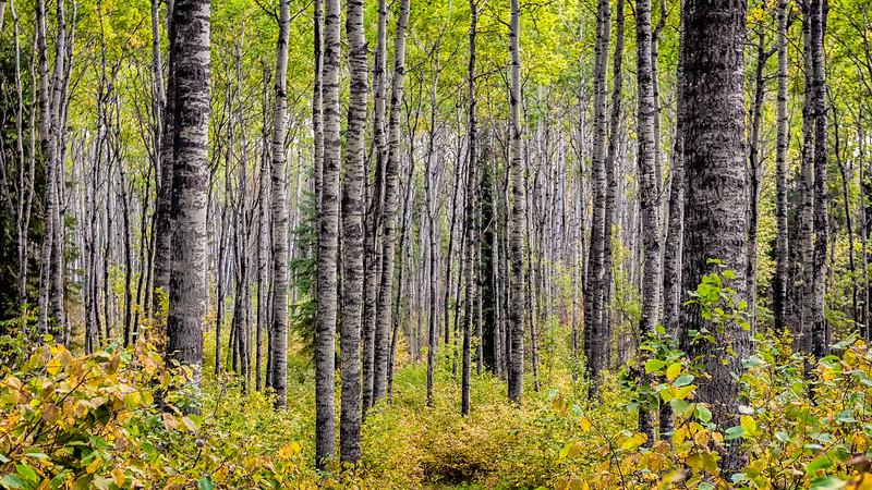TR-Norwegian Woods-Hans Holtkamp