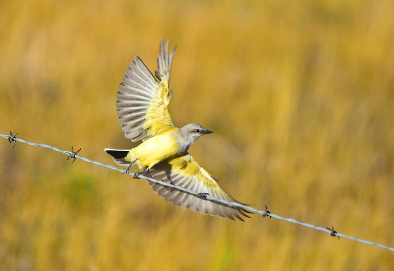 TR-Bird on a Wire-Kathy Meeres