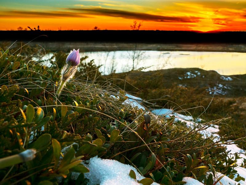 1Print-NA-Saskatchewan Spring Sunset-Gayvin Franson