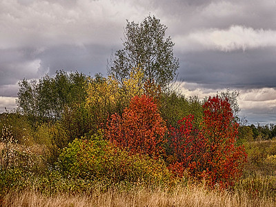 1Print-NA-Colours of Fall-Barry Singer