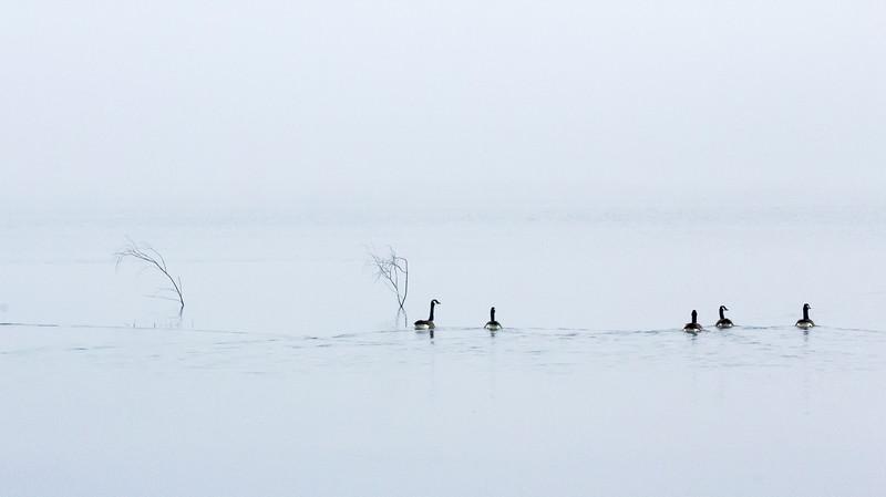 MN-Alone In The Fog-June Mcdonald