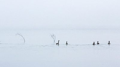 MN-Alone In The Fog-June Mcdonald