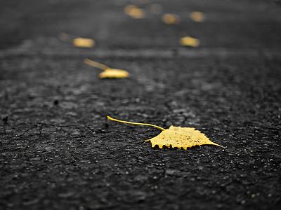1Print-MN-Footsteps-Bruce Guenter