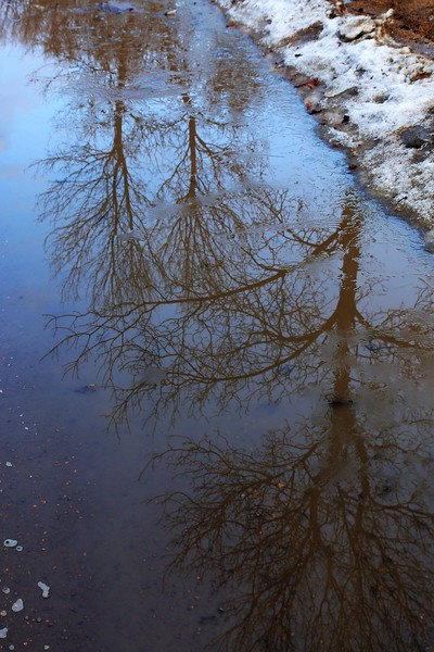 TR-Reflections of Winter-Cathy Baerg