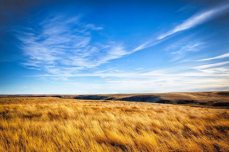 1Print-SC-A Prairie Wilderness-Marcia Provenzano