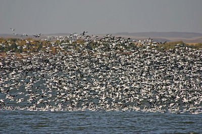 TR-The Birds-Ian Sutherland