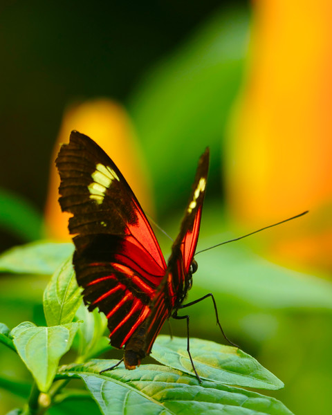 TR-Butterflies are Free-Gayvin Franson