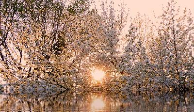 AR-Eternal Sunshine of the Spotless Mind-Richard Kerbes