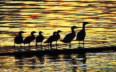 TR-On Golden Pond-Gordon Sukut