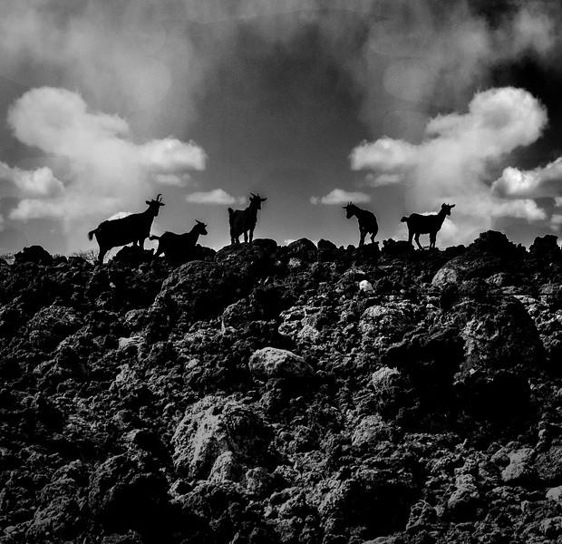BW-Goat Hill-Barry Singer