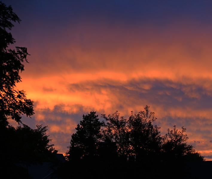 TR-Trees At Sunset-Ian Sutherland