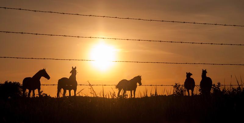 TR-Equus Solace-Deanna Paull
