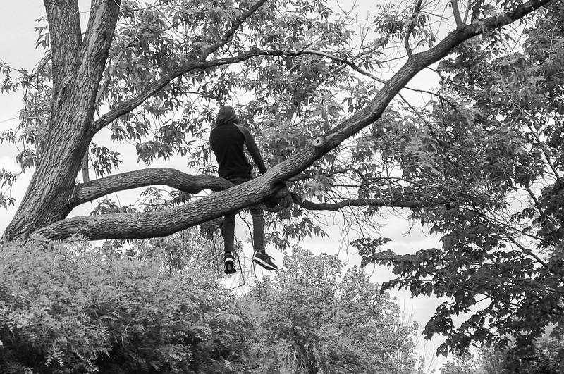 Tree Sitter-Richard Kerbes