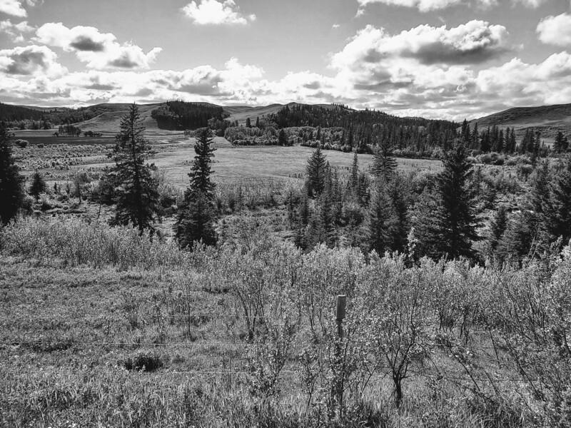 Summer In The Hills-Kathy Meeres