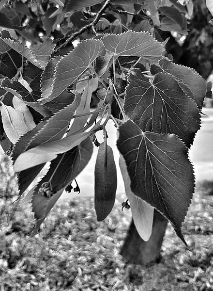 Leaf Veins-Judy Salloum