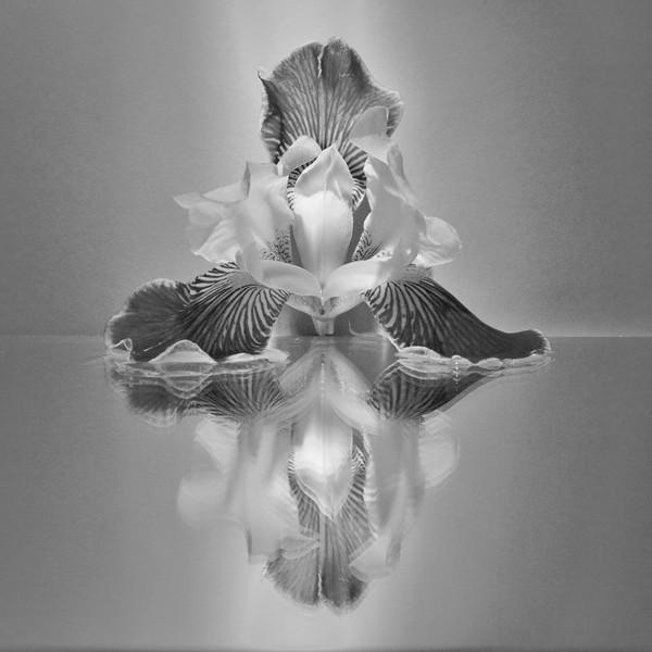Look Deep Into My Iris-Barbara Rackel