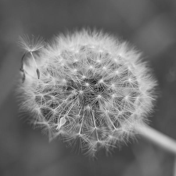 Halo Of Wishes-Rob Arthur
