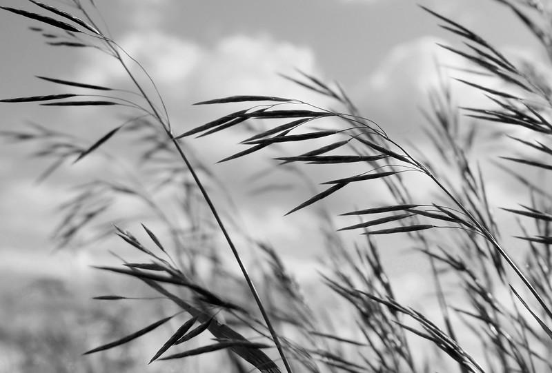 Prairie Wind-Doris Santha
