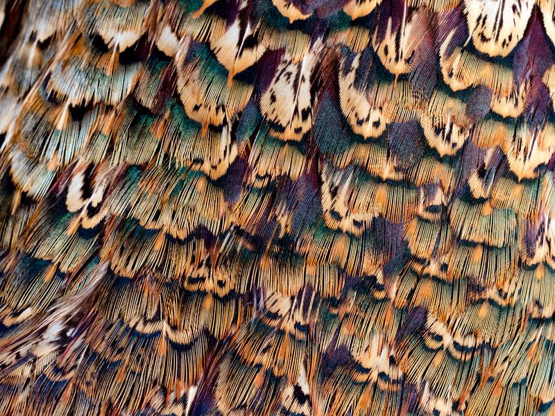 Feather 2-Rae McLeod