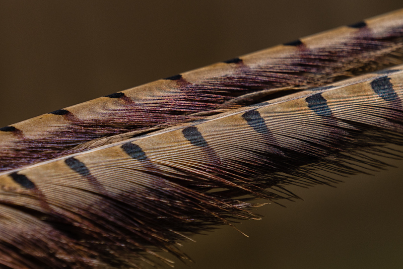 De Tail Detail-Rae McLeod