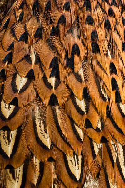 Feather 1-Rae McLeod