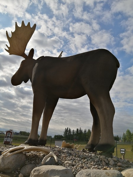 Worlds Largest Moose-Duncan Myers