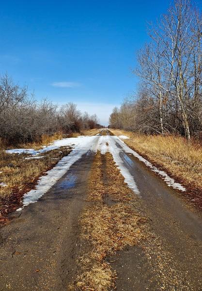 Spring Road-Kathy Meeres