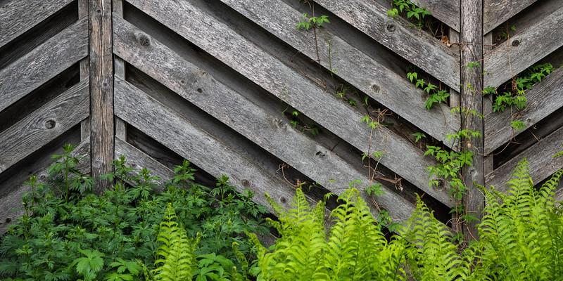 Backyard Patterns-Mary Lou Fletcher