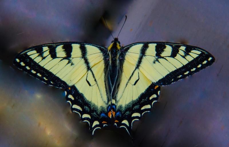Butterfly-Michele Kralkay