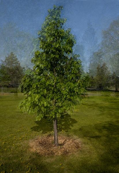 Green Tree-Barry Singer