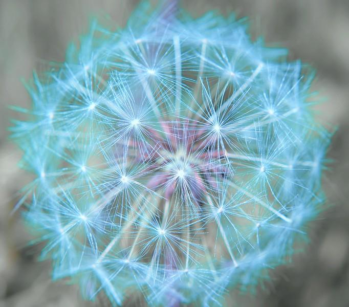 1-CR-Circular Weed Seed-Barbara Rackel