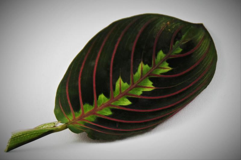 2-TR-Leaf Lines-Helen Brown