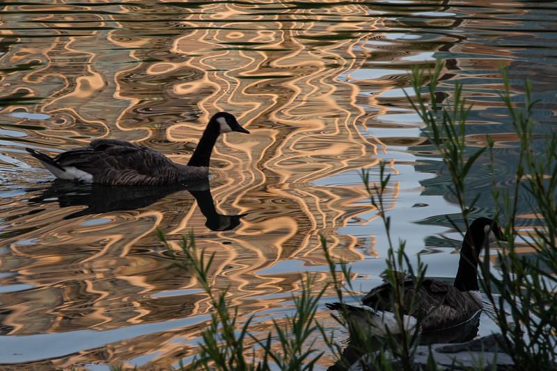 2-TR-On Golden Pond-Mary Lou Fletcher