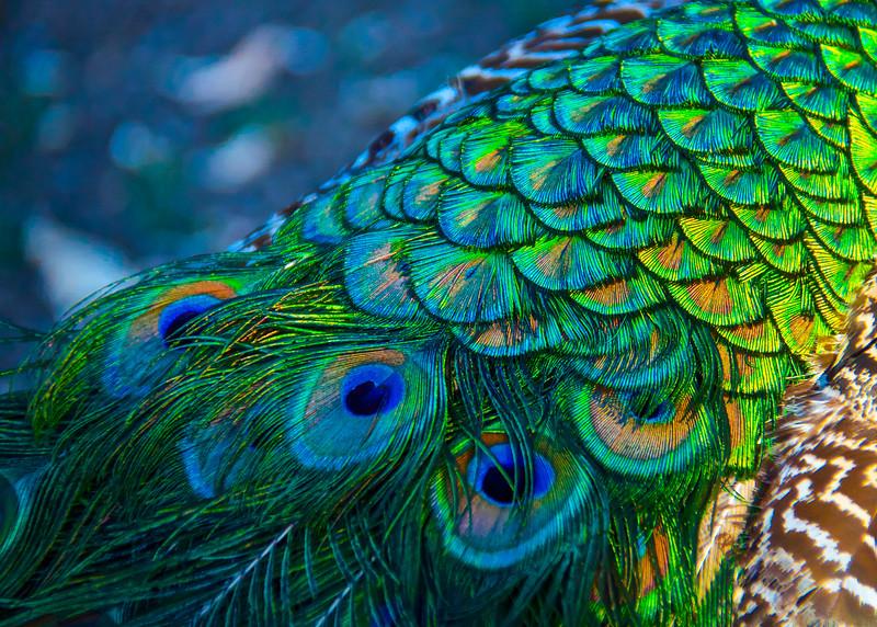 2-TR-Rainbow Feathers-Michele Kralkay