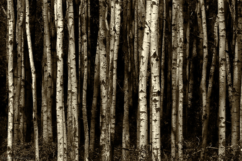2-BW-The Woods Are Lovely, Dark And Deep-Rae McLeod