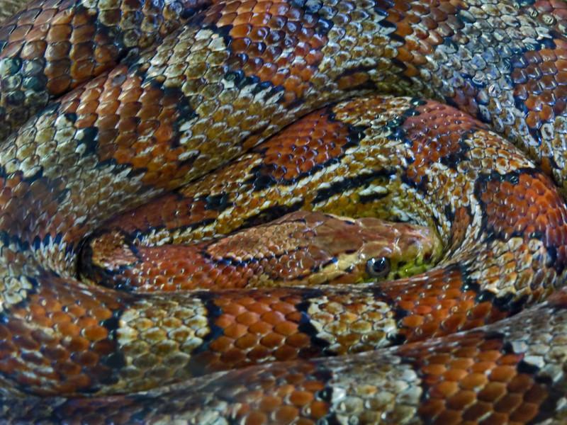 2-Let Sleeping Snakes Lie-Rob Arthur