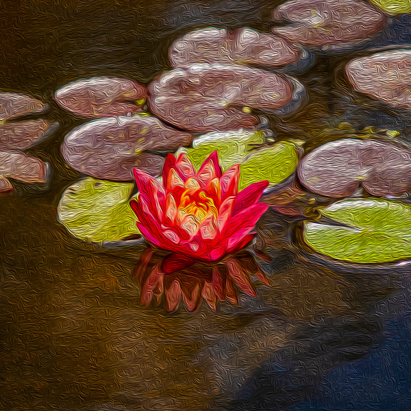 2-Painted Water Lily-Cathleen Mewis