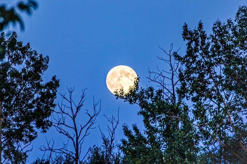 2-Moon In The Cradle-Jane Hiebert