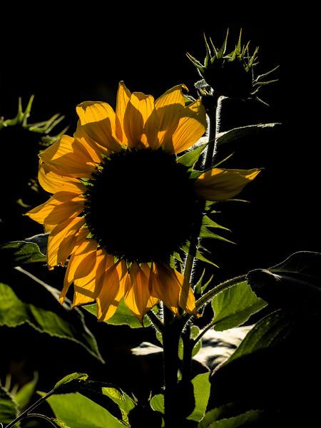 2-Sun Rising-Bruce Guenter