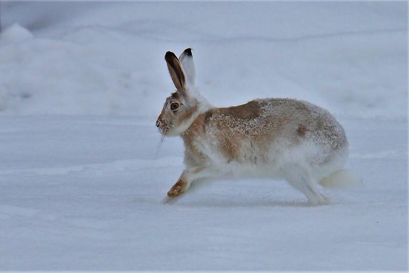 2-Running Bunny-Cathy Baerg