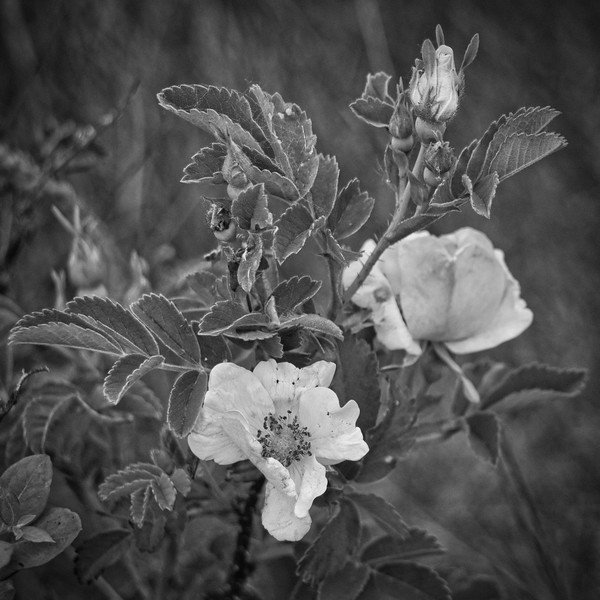 Bud And Blossoms-Rob Arthur