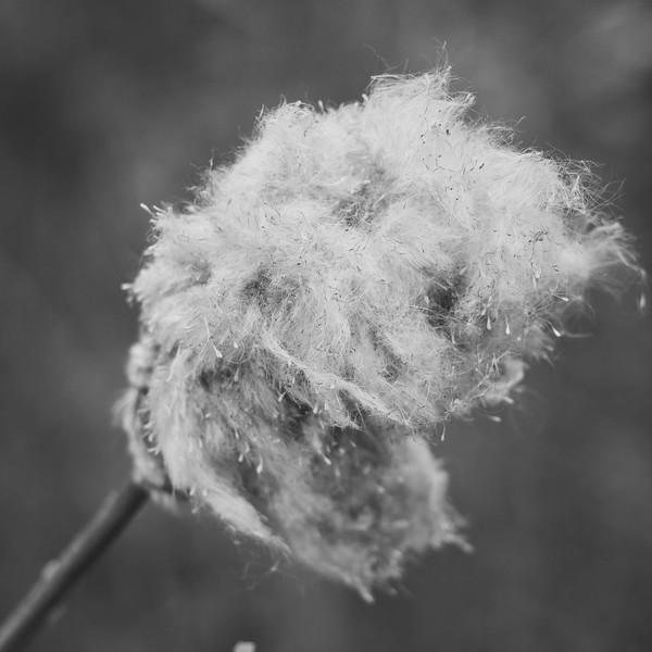Look Cotton Candy-Rob Arthur