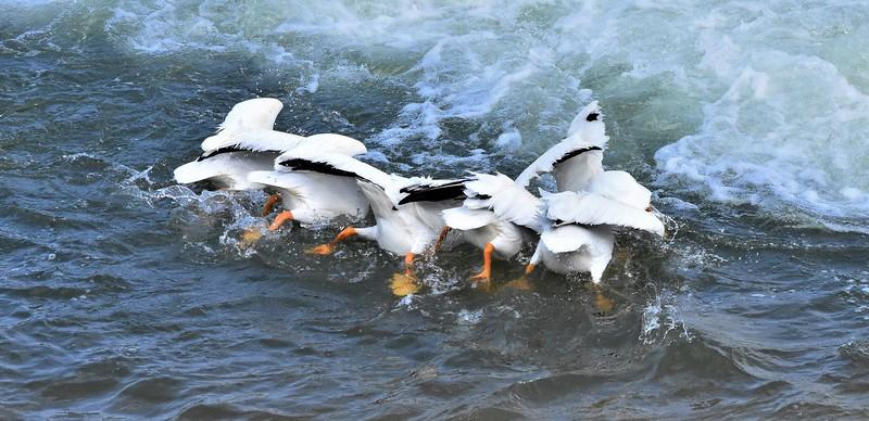 1  2  3 - Fish!-Helen Brown