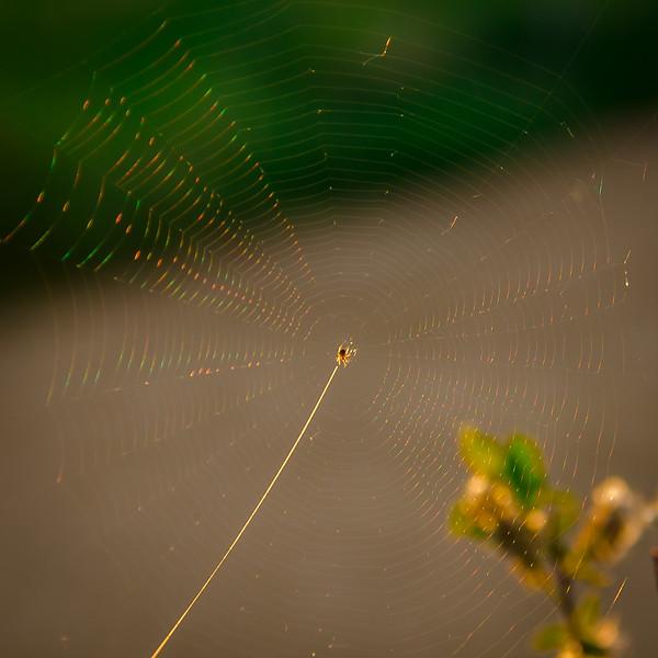 Light Lead On Rainbow Web-Michele Kralkay