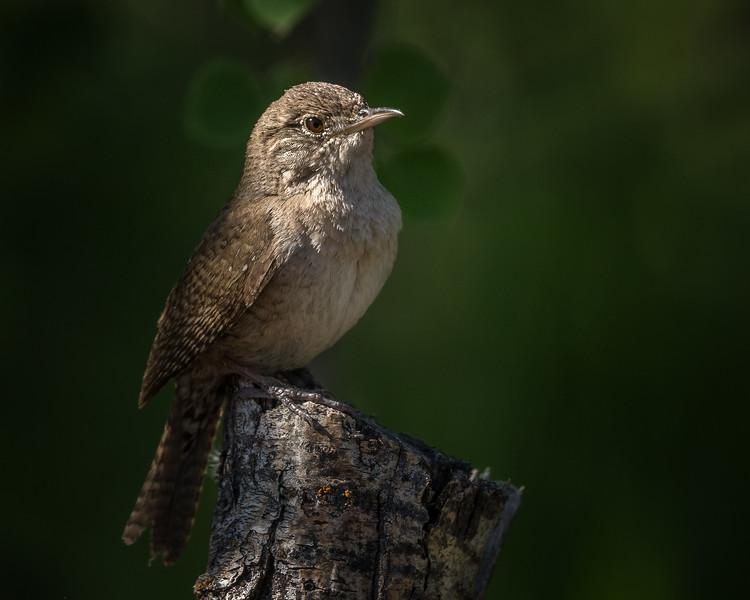 Nature's Spotlight-Char Mcgregor